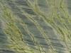 Verde Bamboo Granite Color Sample